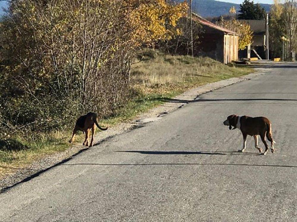 Imagen de los dos animales.